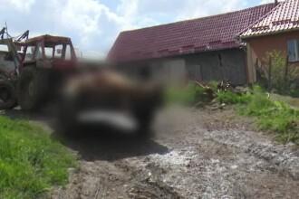 Două vaci, sfâșiate de un urs în Bistriţa-Năsăud.
