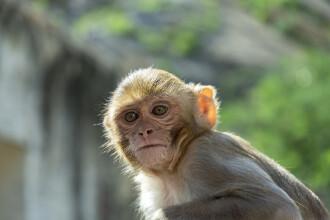 O tânără a murit, după ce a căzut de pe un acoperiș, în timp ce încerca să scape de un atac al unor maimuțe