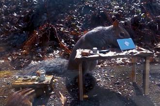 Imaginile care au cucerit Internetul. Până şi veveriţele respectă distanţarea socială