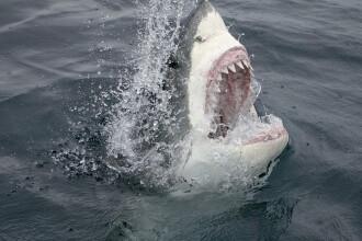 Un bărbat de 60 de ani, ucis de un rechin de 3 m în timp ce făcea surf