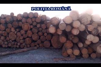Percheziții de amploare în mai multe județe din țară într-un dosar de tăieri ilegale de arbori
