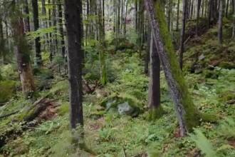 """Ministrul Mediului: """"Suprafața pădurilor seculare, strict protejate din România, se va dubla"""""""