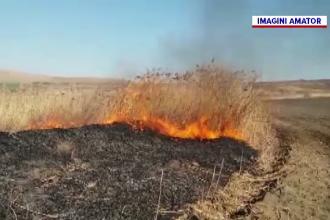 Incendiile de vegetație iau amploare în România. Semnalul de alarmă tras de activiștii de mediu