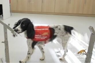 Câinii, folosiți pentru a depista coronavirusul în câteva secunde. Ce spun experții