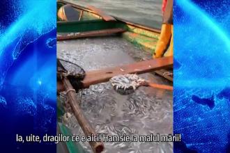Pescarii s-au adaptat vremurilor. Cum poți avea pește proaspăt din Marea Neagră direct la tine acasă