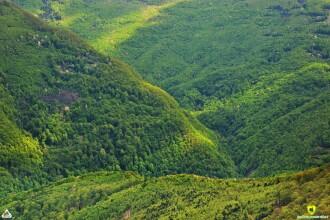 VIDEO. Evenimentul care are loc o singură zi pe an, filmat într-un parc național din România