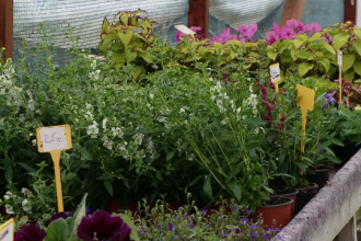 Firmele specializate în amenajarea grădinilor și teraselor, tot mai prospere pe timp de pandemie