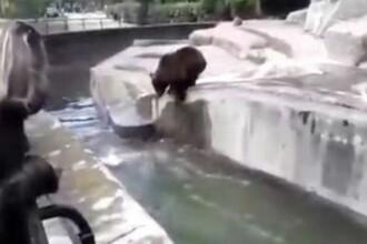 VIDEO Un tânăr s-a luptat cu ursul la zoo. A fost amendat pentru un motiv inedit