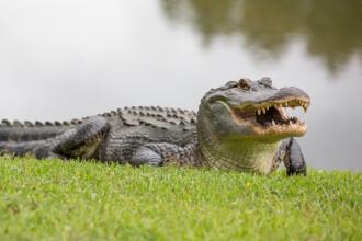 """Luptă de proporții între un bărbat și un aligator de 4 metri. A încercat să-și salveze câinele: """"L-am lovit în cap"""""""