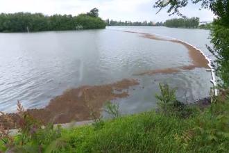 Ulei deversat intenționat în lacul Băneasa. Firmele din zonă riscă amenzi uriașe