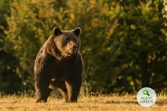 Presa internaţională relatează cazul ursului Arthur ucis în România de prinţul Emanuel von und zu Liechtenstein