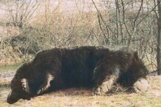 Ursul Arthur, ucis dintr-un singur foc. De ce nu-şi poate lua prinţul acasă macabrul trofeu