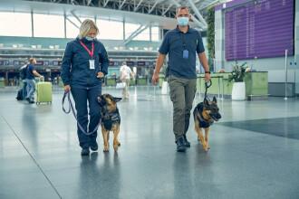 Emiratele Arabe Unite folosesc câini în aeroporturi ca metodă rapidă de detectare a Covid-19