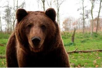 Încă un urs mort în România! Primele detalii