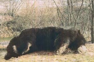 """DNA a început o anchetă penală în cazul ursului """"Arthur"""", împușcat de prințul Emanuel de Liechtenstein"""