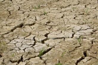Culturi parjolite si oameni ramasi fara apa de baut. Efectele dezastruoase ale secetei