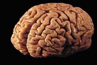 In 2019 creierul uman ar putea fi inlocuit. Iata ce monstru pregatesc IT-stii