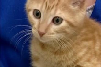 AH1N1 ataca si animalele! Prima pisica bolnava de gripa noua!