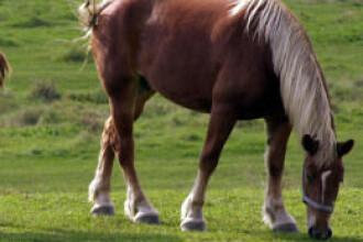 Trei cai de rasa impuscati misterios in doar doua luni, intr-un sat slovac