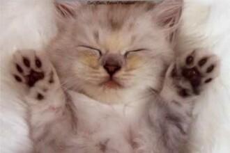 Miauuu... Mi-au furat coroana! Vezi aici concursul felinelor!