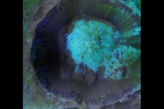 Ce a aflat NASA despre viata pe Marte. Suprafata planetei nu mai este miza principala