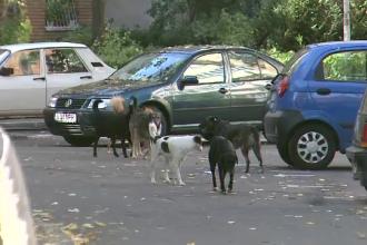 Pagube de mii de euro provocate de caini masinilor.Ce sanse au posesorii auto in fata asiguratorilor