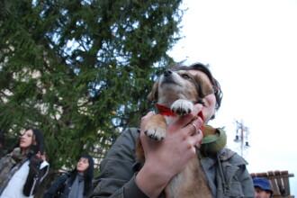 Bucurie de Craciun. Campanii de adoptii de caini la Targul de Craciun din Sibiu