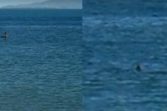 Monstrul din Loch Ness ar fi fost zarit in Australia.
