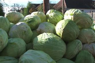 Prea multa varza, prea putina organizare. Agricultorii romani lasa legumele sa putrezeasca pe camp