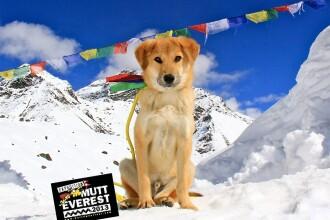 Un caine maidanez pe nume Rupee este primul patruped care escaladeaza Muntele Everest