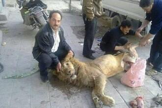 Loviti de foamete. Rebelii sirieni ar fi ucis si mancat un leu de la zoo