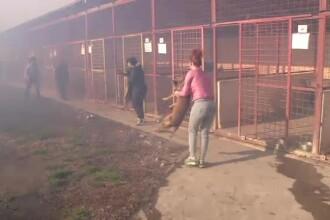 Zeci de catei fara stapan au ars de vii, intr-un incendiu petrecut langa Timisoara. Alti 300 au fost salvati in ultima clipa