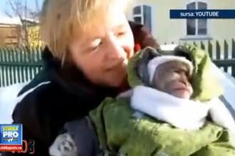 Imaginile care s-au viralizat instant. Reactia unei maimute cand vede zapada pentru prima data. VIDEO