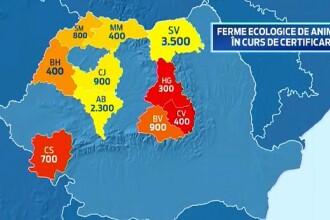 Vanzarile la carnea bio, fara hormoni si antibiotice, au crescut cu 20% in Romania. Cat platim pentru a manca sanatos