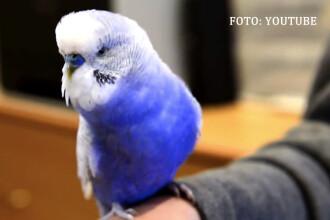 iLikeIT. Viralul saptamanii: papagalul care imita perfect un robot celebru