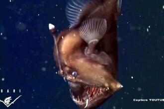 Premiera in lumea misterioasa a oceanelor: a fost filmat si fotografiat