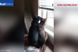 Pisicile care au cucerit internetul. Gesturile de tandrete surprinse de stapanul lor, pe camera. VIDEO