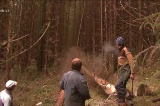 Padure furata copac cu copac, la doi pasi de Bucuresti.