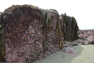 Fenomen straniu dupa seismul din Noua Zeelanda. Ce a aparut pe plaja dupa ce fundul marii s-a inaltat cu 2 m