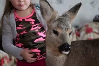 O familie din Rusia are drept animal de companie o caprioara. De ce le-a permis legea sa o pastreze pe Milla