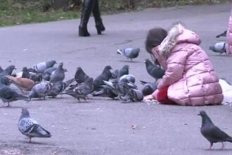 Parcul Cișmigiu, sufocat de mizerie. Ornitologii le cer oamenilor să nu mai hrănească porumbeii