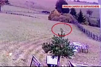 Lupii și urșii fac ravagii în gospodăriile oamenilor din Braşov. Soluţia găsită de păgubiţi