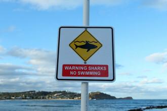 Un surfer amator a bătut rechinul care a încercat să-l muşte.