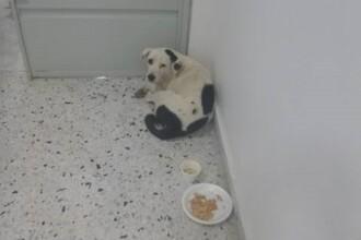 Un câine a murit de tristeţe după ce stăpânul l-a abandonat pe un aeroport
