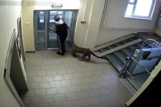 Un rus ţine un leopard în apartament şi îl scoate în faţa blocului
