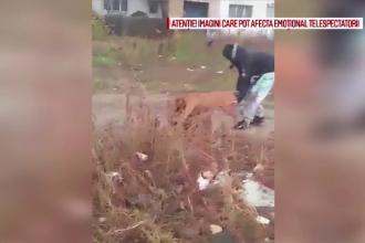 Imagini șocante cu un câine de luptă care atacă un cățel, după ce este asmuțit de stăpân