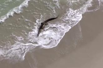 Locuitorii unui orășel din Florida, în alertă, din cauza unui crocodil