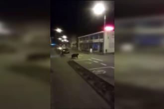 Femeie fugărită de un urs, prin centrul stațiunii Sovata. Imaginile surprinse de camere