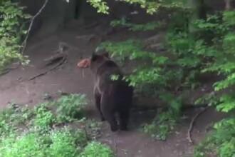 Un tânăr din Harghita a ajuns la spital, după ce a fost atacat de urs