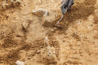 Fosile de acum 3,5 miliarde de ani ''indică faptul că viaţa pe Terra a apărut mult mai devreme''